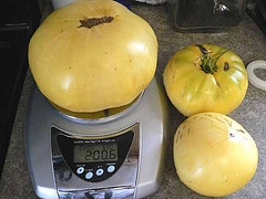 A 2-lb tomato grown without pesticides
